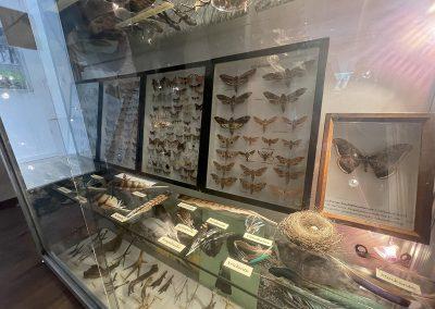 Ausstellung Wildtiere und Lebensräume